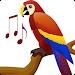 Download اصوات الطيور - Birds Sounds 2.0 APK
