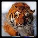 Download Animal Wallpapers! 4.8 APK