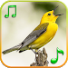 Birds Sounds Ringtones