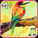 Download Birds sound ringtones 1.1 APK