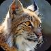 Download Bobcat Sounds 2.0 APK