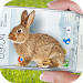 Download Bunny in Phone Cute joke 1.3 APK