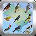 Download Canto de Pássaros Brasileiros  APK