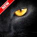 Download Black Panther Wallpaper 1.7 APK