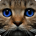 Download Find the Cat 4.0 APK