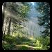 Download Forest Live Wallpaper 7.6 APK