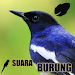 Download Koleksi Suara Burung 1.1 APK