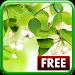 Download Leaf Live Wallpaper 1.0.7 APK