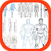 Download Learn to Draw Human Body 1.1 APK