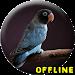Download Masteran Lovebird Paud Ngekek Panjang MP3 1.0.2 APK