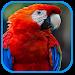 Download Parrot Sound 1.0 APK