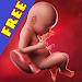 Download Pregnancy apps. Week by week 9.00007 APK