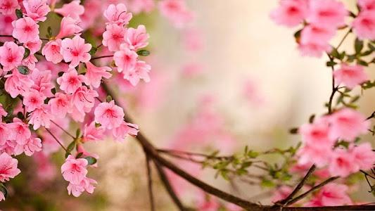 Download Spring Flowers Live Wallpaper 50 APK
